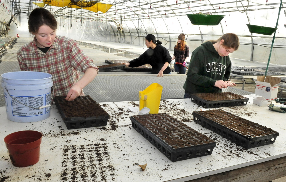 """Unity College students work in a warm greenhouse planting vegetable seeds at the Half Moon Gardens/McKay Agricultural Research Station in Thorndike on Friday. The produce will eventually be used by the college dining services as part of the sustainability program. From left are Megan Lewis, Ru Allen, Erin Hogan and Bethany Slack. Slack said she liked the work and added, """"It's fun working in here because it's warm and green."""" Temperatures were near 70 degrees inside and 14 degrees outside."""