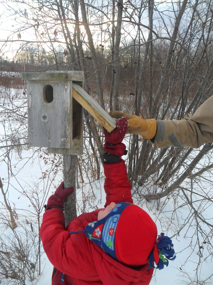 Elijah Irving checks out a bluebird box at the Richardson Memorial Preserve in Unity, the location of the March 7 family fun event hosted by Sebasticook Regional Land Trust in partnership with Waldo County General Hospital and 5210 Let's Go! Waldo County.