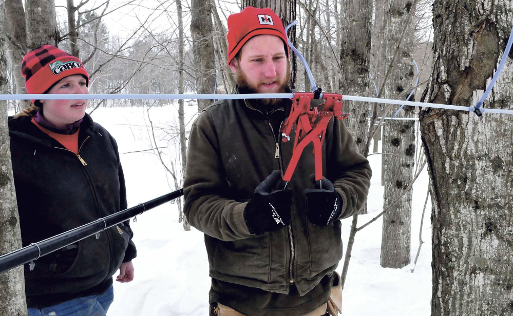 Andrew Miller of Battle Ridge Syrup in Clinton uses a tubing tool to crimp several maple sap tubes to a connector in the woods in Canaan. His partner, Caleigh Wright, watches. The couple said they hope their 320 taps produce sap on Monday as temperatures are expected to rise above freezing during the day this week.