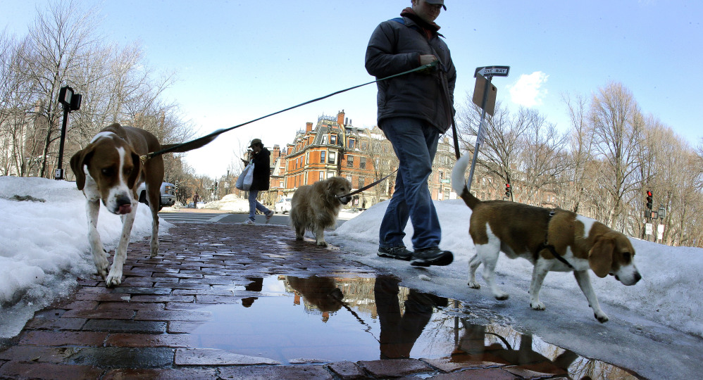 A pedestrian and dogs walk along a wet sidewalk lined with melting snow in Boston on Monday as New England residents enjoy a trend toward warmer temperatures.