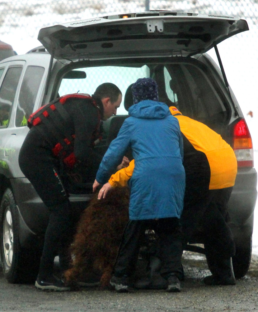 An Irish Setter is delivered to its owner shortly after being rescued from the icy waters of the Kennebec River in Winslow on Friday.