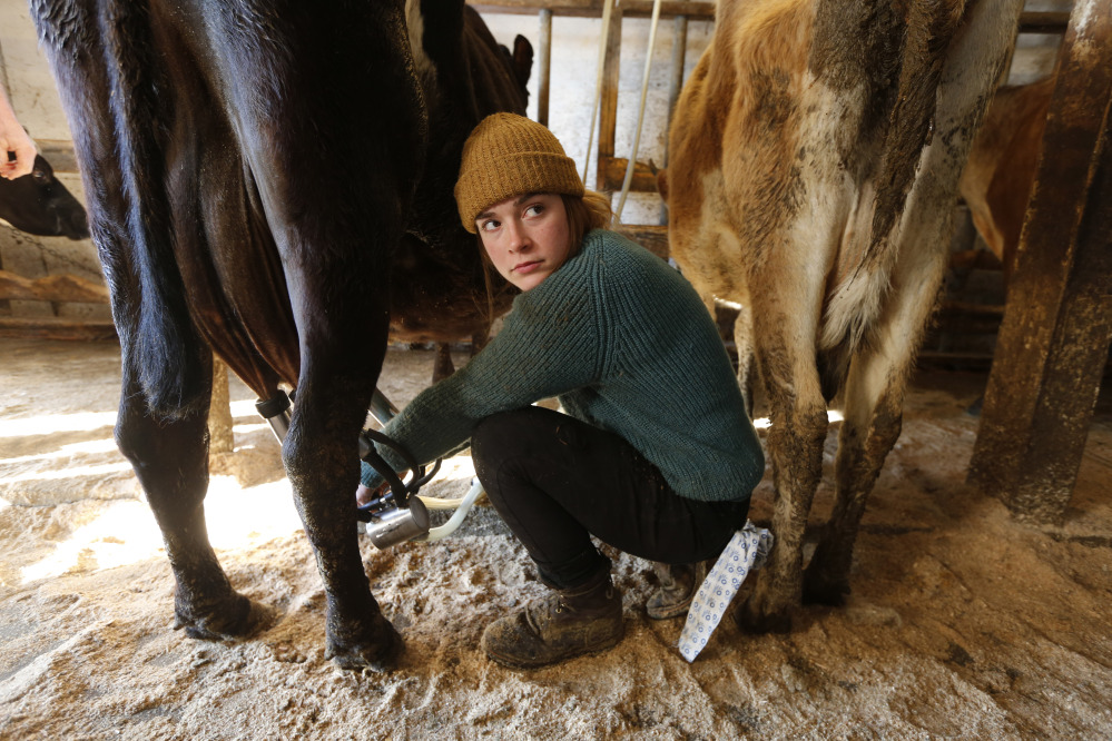 Jade Ouimette, 21, milks cows at the Straw Farm in Newcastle, Maine. The state's dairy farmers are divided over a potential vote this week on a statewide proposal that could change restrictions on raw milk sales.