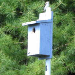 The tree swallows hopefully will be back at the Bass Falls Preserve in time for SVCA's Earth Day nature journaling walk Wednesday, April 22.