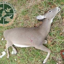A photo by the Maine Warden Service shows a deer that was illegally killed in Chesterville Wednesday, April 22.