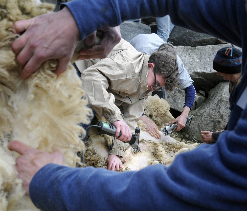 Joseph Woodbury Jr., center, and other students shear sheep during a class held at a farm in Washington on Sunday.