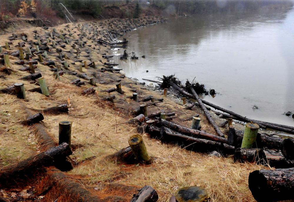 This embankment along the Sandy River near the Whittier Road in Farmington was reinforced recently to reduce erosion. Volunteers will replant the embankment with seedlings because many of the first group planted there didn't survive.
