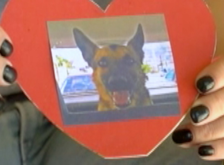 Julieta Robles' dog, a German shepherd named Box, is one of scores found dead in Hermosillo, Mexico.