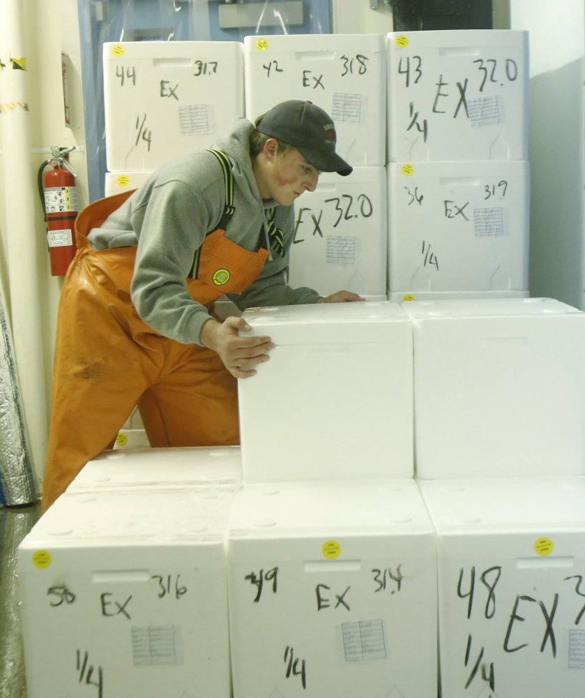Andrew Goulden stacks foam containers containing live lobsters for export to China.