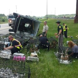 Portsmouth, New Hampshire, police and animal control officer at scene of rollover on I-95. Portsmouth police photo