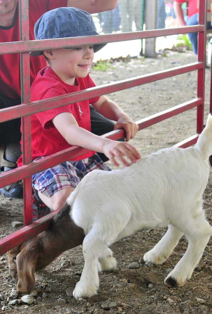 Caleb Knock, 6, of Albion, pets a kid Friday during the Northeast Livestock Expo at the Windsor Fairgrounds.