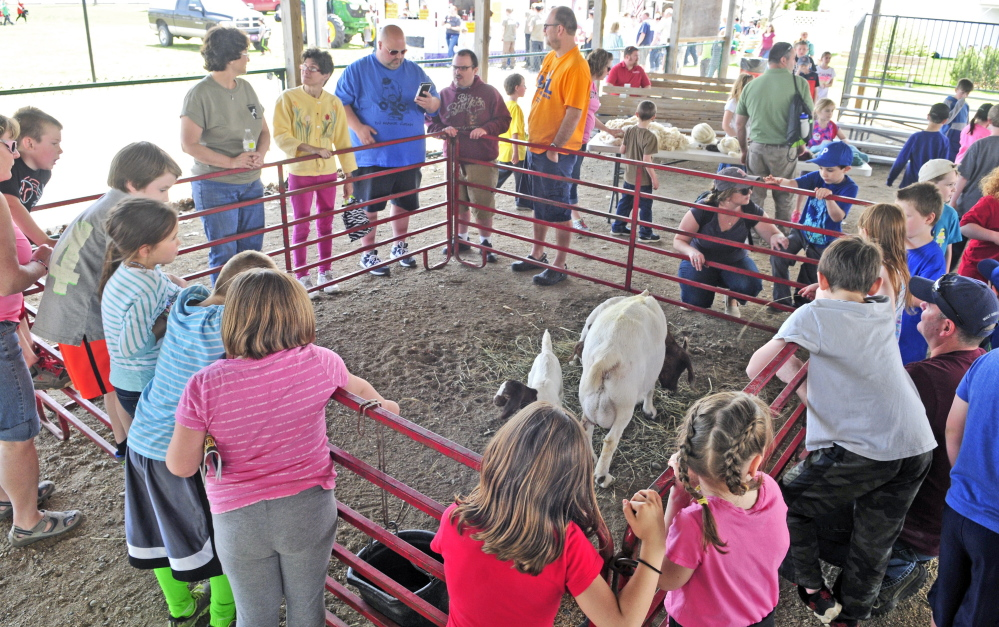 Visitors watch a goat and a pair of kids during the Northeast Livestock Expo on Friday at the Windsor Fairgrounds.