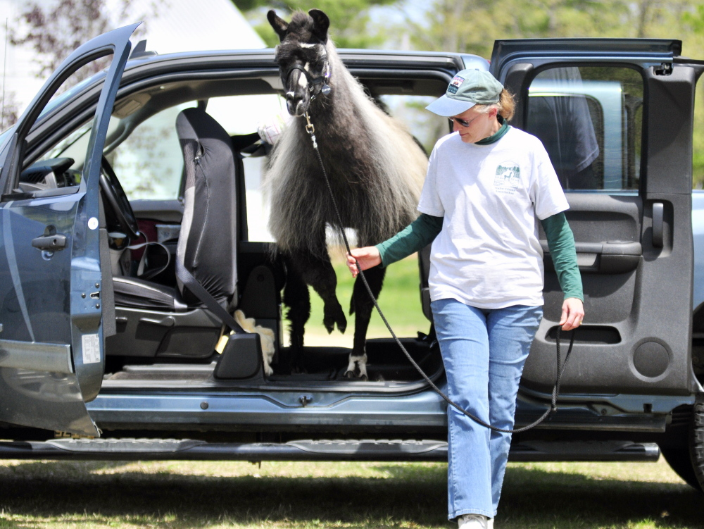 Becky Smith leads Eclipse, a llama, through part of a obstacle course during the Northeast Livestock Expo on Friday at the Windsor Fairgrounds.