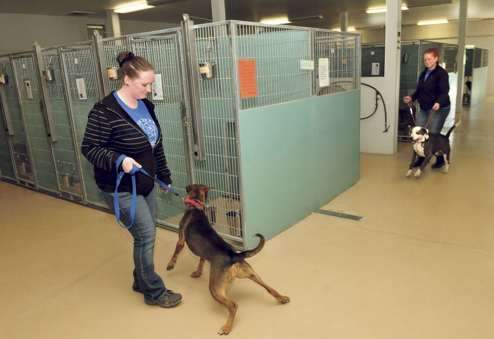Humane Society Waterville Area employees Karen Knowlton, left, and Melissa Dawes bring dogs into kennels after exercising them at the shelter on Thursday.