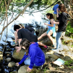 Messalonskee Middle School students release 250 tiny brook trout fry into Messalonskee Stream on Wednesday in Oakland.