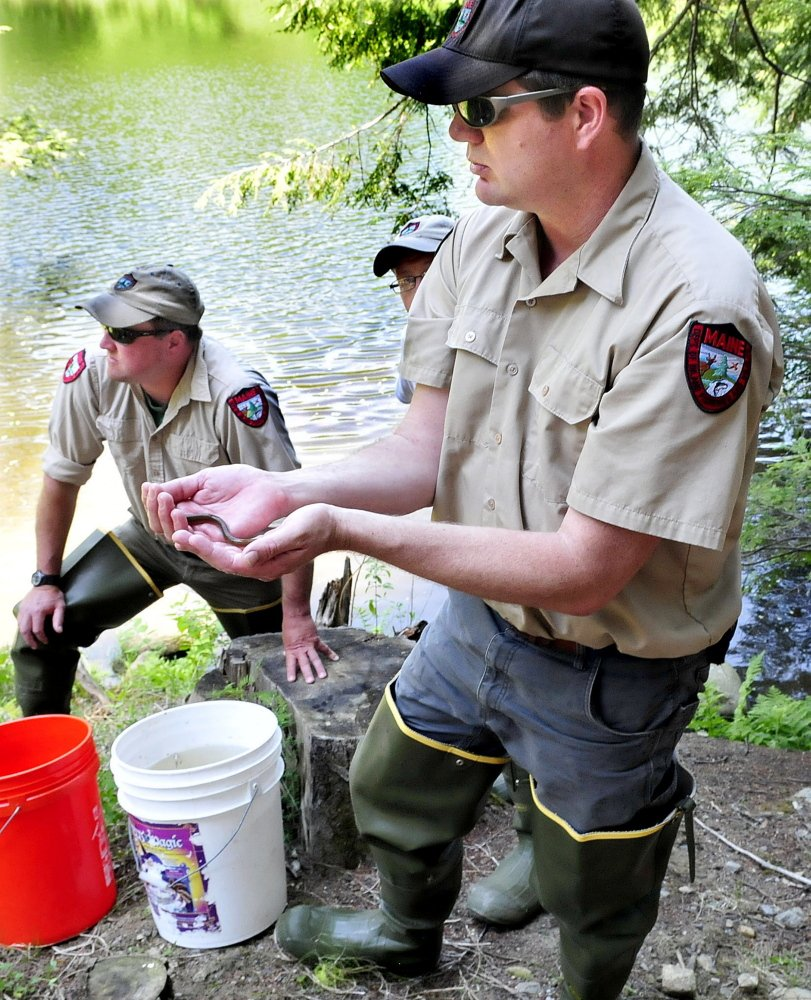 Messalonskee students raise release brook trout in for Fishing jobs in maine