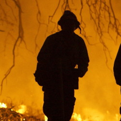 Years of drought has left California's national forests susceptible to fire and beetle attacks.