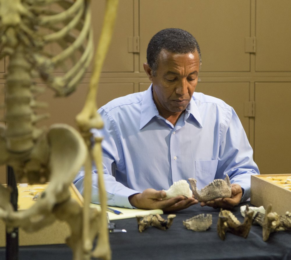 "Yohannes Haile-Selassie conducts comparative analysis of Australopithecus deyiremeda at the Cleveland Museum of Natural History. The fossil find in Ethiopia gives further evidence that the well-known ""Lucy"" species had company."