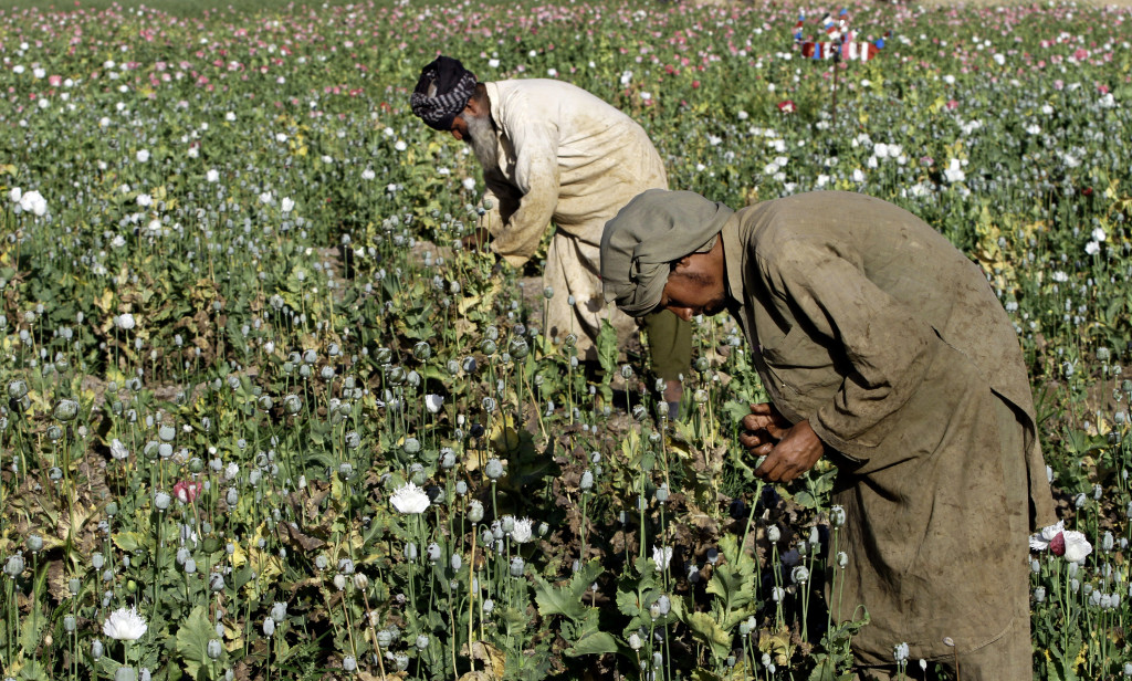 . The practice of growing poppies for opium is illegal in Afghanistan ...