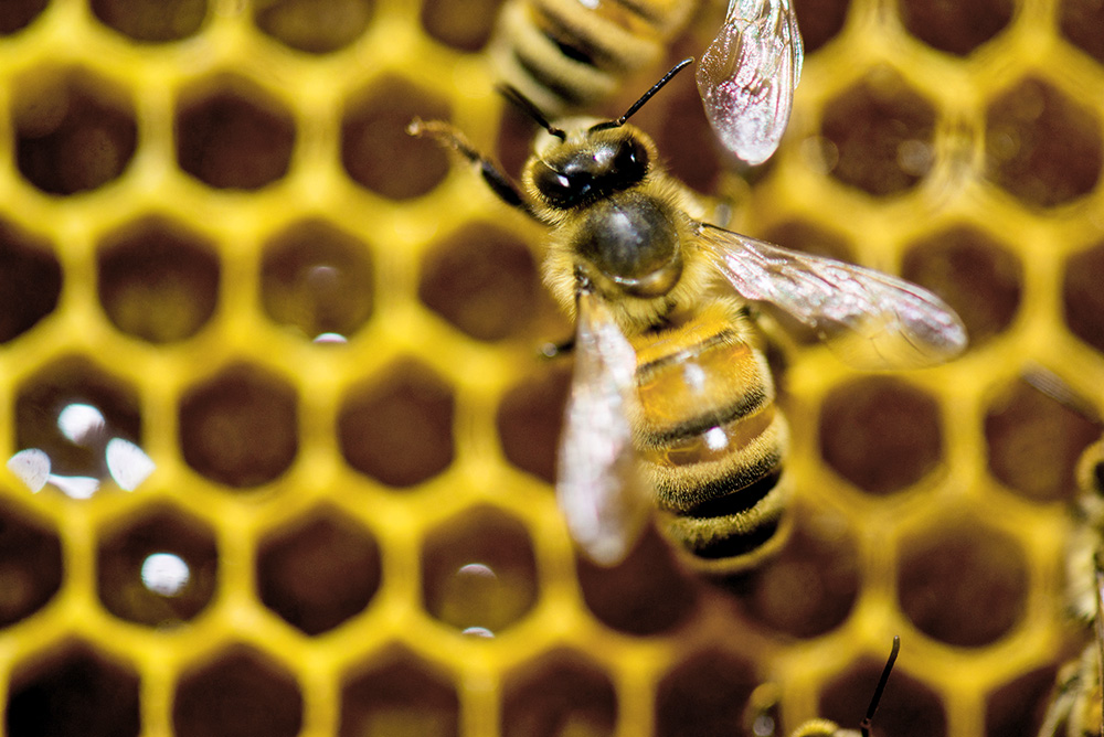 What shocked entomologists is that for the first time they've noticed bees dying more in the summer than the winter, says the study's co-author. The Associated Press
