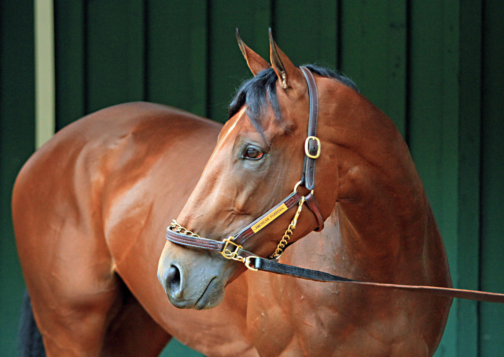The breeding rights of Kentucky Derby and Preakness Stakes winner American Pharoah have been sold to Coolmore Ashford Stud. The horse will continue to race through 2015 and competes in the Belmont Stakes on June 6.