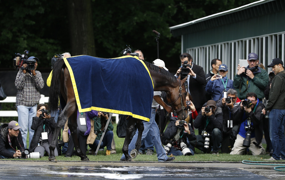Kentucky Derby and Preakness Stakes winner American Pharoah is led by a groom back to the barn after a bath Wednesday at Belmont Park in Elmont, N.Y. American Pharoah will try for the Triple Crown when he runs in Saturday's 147th running of the Belmont Stakes.