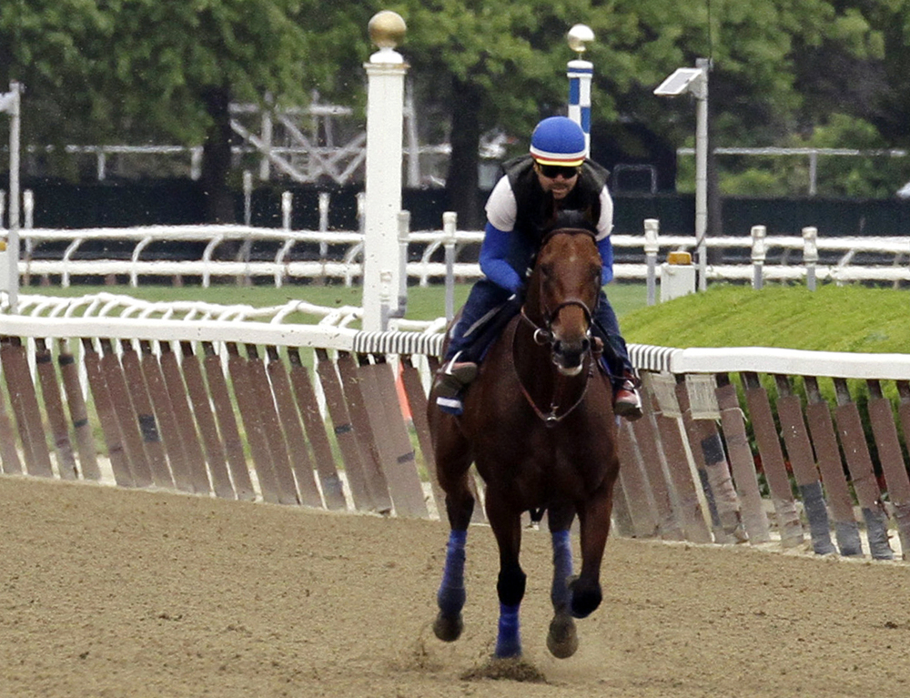 AP photo   Kentucky Derby and Preakness Stakes winner American Pharoah, with exercise rider Jorge Alvarez up, gallops around the track at Belmont Park on Friday in Elmont, N.Y. American Pharoah will try for a Triple Crown when he runs in Saturday's 147th running of the Belmont Stakes horse race.