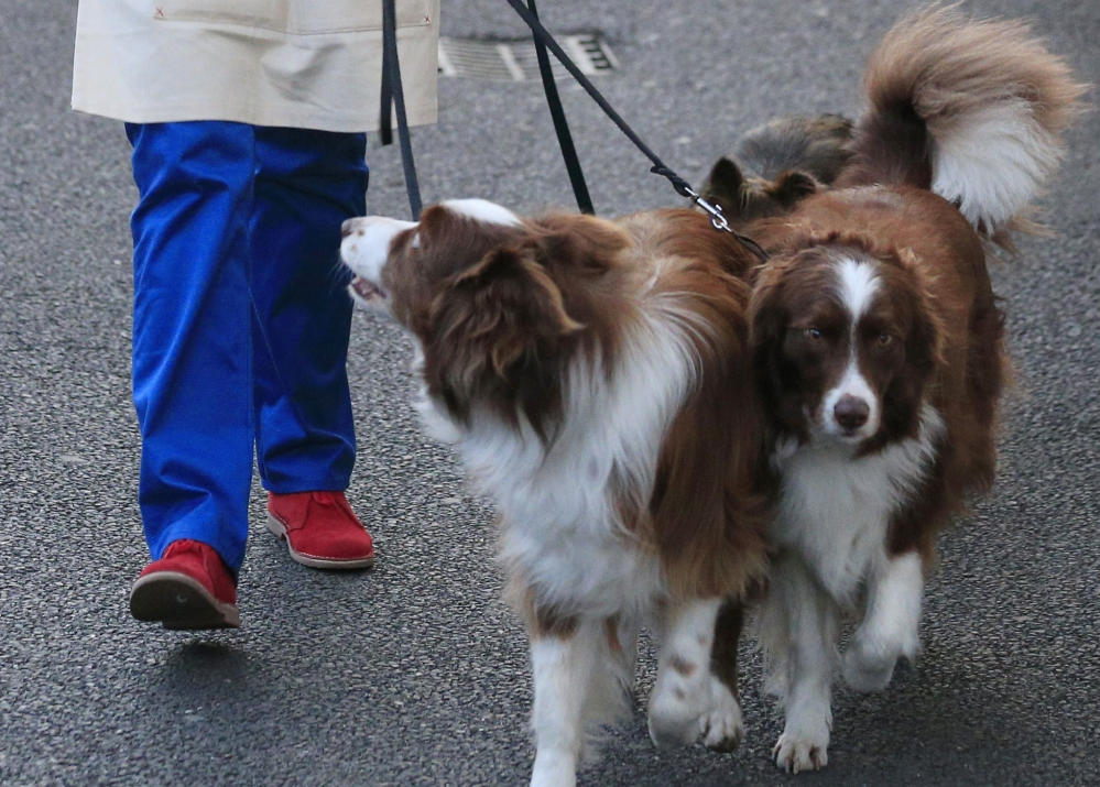 "Lookalike border collies Matisse and Chase may have been mistaken for one dog by the voting viewers of ""Britain's Got Talent."""
