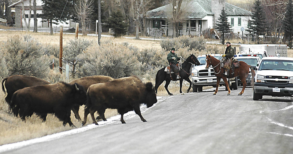 FILE - This Jan. 19, 2006 file photo Mounted Yellowstone National Park wranglers haze stray park bison off private land about seven miles north of Gardiner, Mont. A pamphlet drawing of a man being gored and flung into the air graphically warns tourists as they enter Yellowstone National Park not to get too close to bison, they're wild animals and can be very dangerous. Rangers distribute the flyer to people as they enter the park but some visitors still aren't getting the message. Bison have gored two people in the Old Faithful area within just the past three weeks. (Garrett Cheen/The Livingston Enterprise via AP, File)