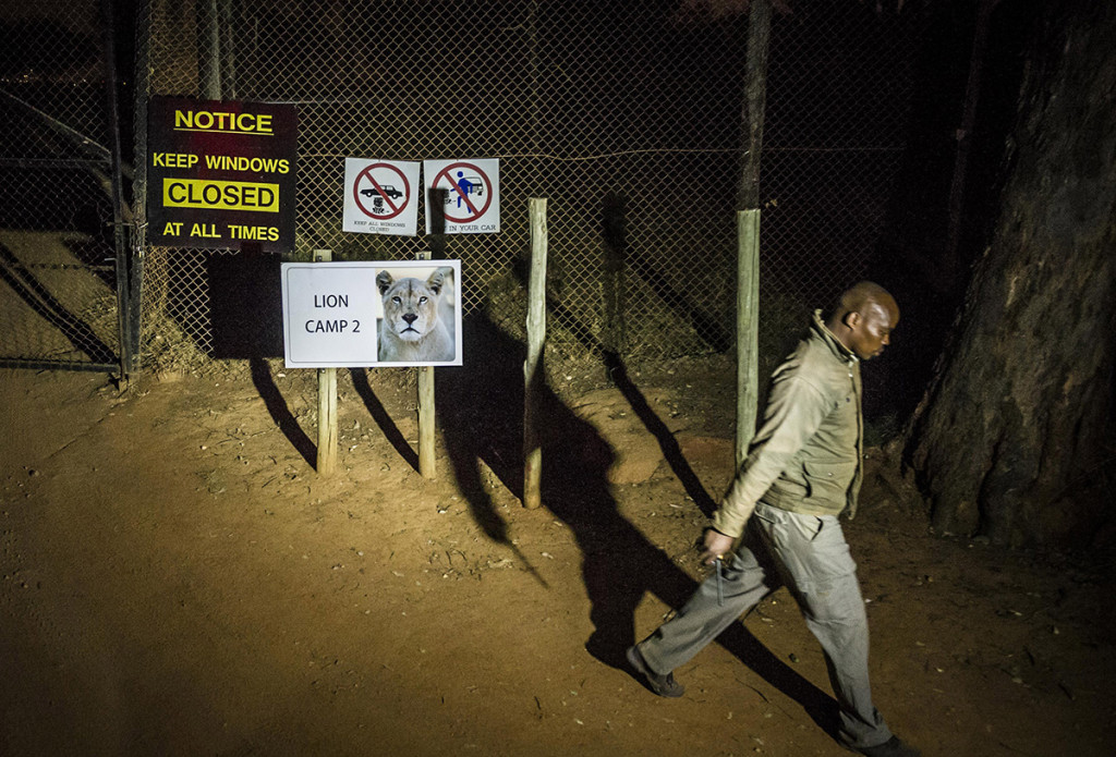A man walks past warning signs at the Lion Park, near Johannesburg Monday. The Associated Press