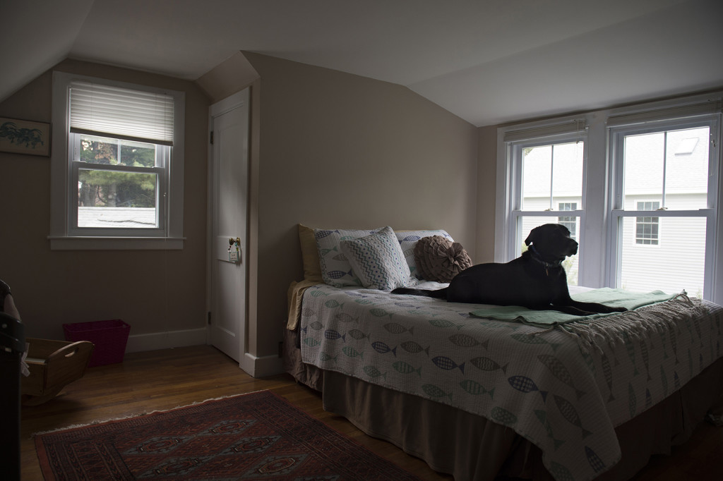 """David McCarthy's black lab Kima, named for the drug fighting detective in """"The Wire,"""" sits on the bed in the room where her owner died of a heroin overdose in Falmouth. The dog has been adopted by her owner's parents.  Washington Post photo by Nikki Kahn"""