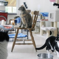 Cats available for adoption at the PALS animal shelter in Winthrop on Tuesday.