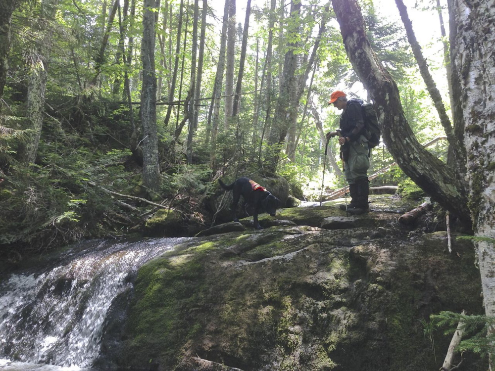 Deborah Palman, president of the Maine Association for Search and Rescue and a former warden with the Maine Warden Service, searches in the western Maine woods with her dog Raven for missing hiker Geraldine Largay on Tuesday, June 17, 2014.