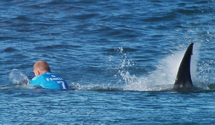 Australian surfer Mick Fanning was knocked off his board by a shark in Jeffreys Bay, South Africa, on Sunday.