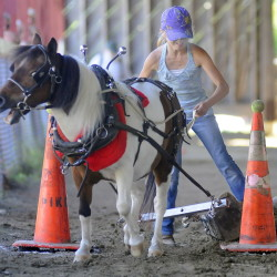 Lacey Cram, 10, of Lisbon, scoots Sunday through cones at the Monmouth Fair. Cram was handling a miniature horse, Tilly, that belonged to fellow teamster, Logan Robinson, 11, of Litchfield.