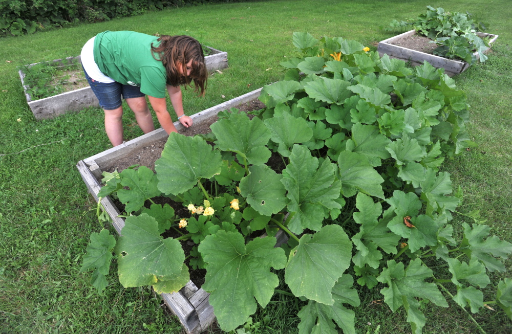 Dory Lombardo, 9, picks weeds from the raised garden beds at the Cornville Charter School in Cornville on Friday. The school's new agricultural program was made possible with a grant from Maine Agriculture in the classroom.