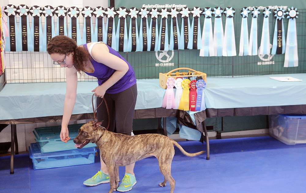 Sophie gets reinforcement Sunday from her handler, Hannah Hutt, during the dog obedience trial in Augusta.
