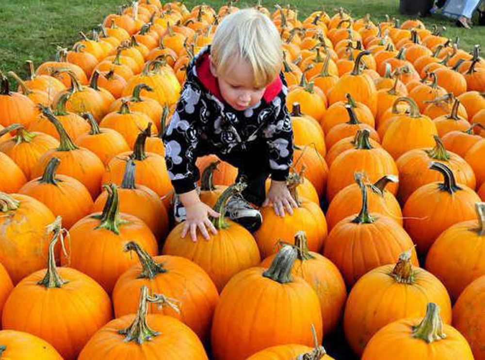 Gabriel Sweetland climbs over scores of pumpkins while picking one out to carve during the Harvest Festival in Waterville last year. The festival will be held in conjunction with the Festival at the Falls this year on Oct. 4.