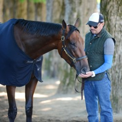 Triple Crown winner American Pharoah is given a cool down walk by exercise rider George Alvarez following a morning workout at Saratoga Race Course in Saratoga Springs, N.Y. on Friday.
