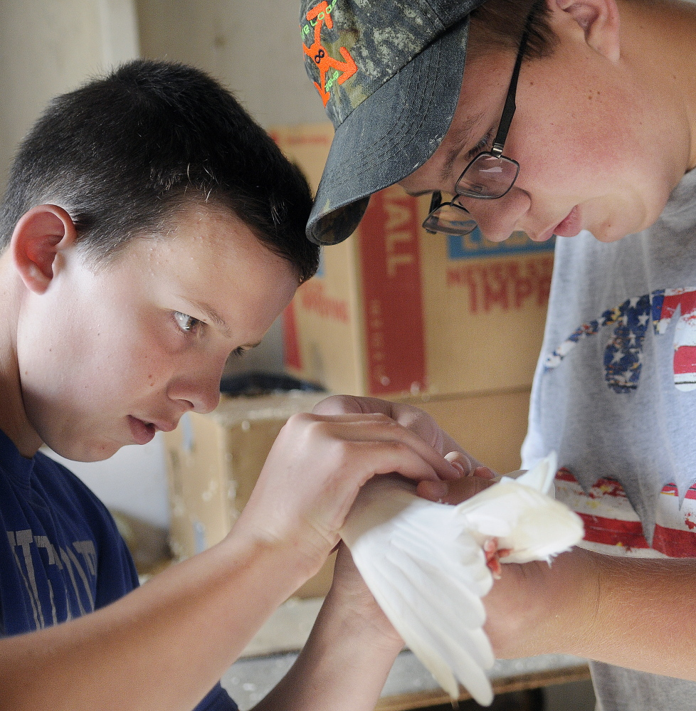 Ethan Pullen, 16, right, and his brother, Ryan, 14, groom an Arabian Trumpeter pigeon on Sunday for judging at the Central Maine Bird Fanciers Club exhibit at the Windsor Fair.  The Oakland teenagers competed with several different birds.