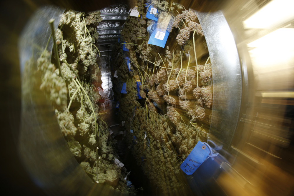 In this photograph taken with a zoom fisheye lens Saturday, April 25, 2015, walls of marijuana dry as a contingent of lawmakers, their staffers and a handful of lobbyists tour one of two retail and grow operations for both medical and recreational marijuana in northeast Denver.