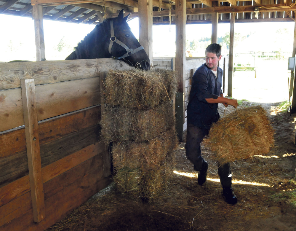 Pheoniix O'Brien fills a stable with bales of hay as one of his draft horses grabs a bite at the Maine Organic Farmers and Gardeners Association site in Unity in preparation for the 39th Common Ground Country Fair, that runs from this Friday through Sunday.