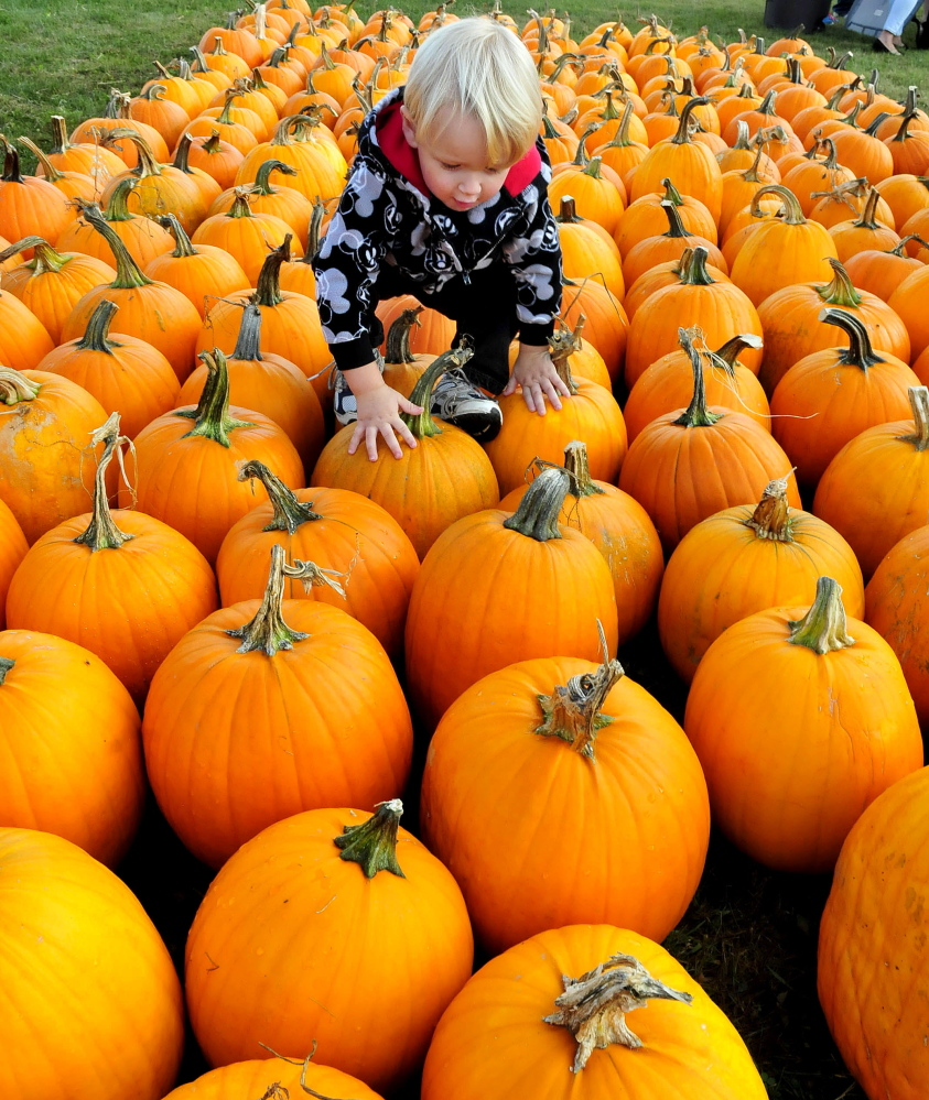 Gabriel Sweetland climbs over scores of pumpkins while picking one out to carve during the Harvest Festival in Waterville last year. The festival is Sunday at Head of Falls, joined by the Festival at the Falls. The city also will celebrate Maine Craft Weekend Friday through Sunday downtown.
