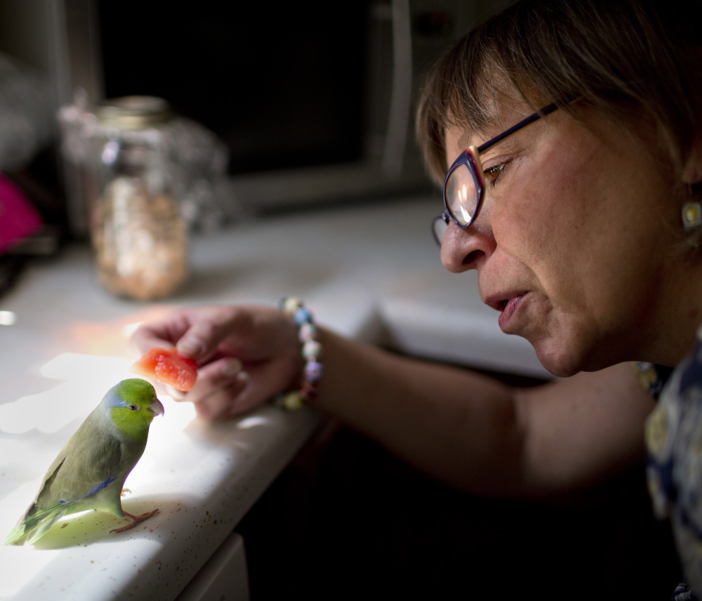 Aimee Kudlak of Portland feeds watermelon to her 4-year-old parrotlet, Basel, on Monday. Basel escaped Kudlak's house and flew away two weeks ago, but a woman a few miles away found Basel and the two connected via Craigslist, with the help of a bird lost-and-found group.