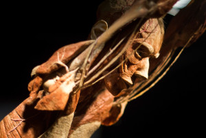 """The """"Body Worlds"""" exhibit uses a plastination procedure to reveal the insides of preserved bodies."""