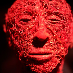 "Part of the ""Body Worlds"" exhibit shows the blood vessel configuration in the human face. The exhibit opens Friday at the new Portland Science Center."