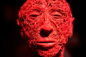 """Part of the """"Body Worlds"""" exhibit shows the blood vessel configuration in the human face. The exhibit opens Friday at the new Portland Science Center."""