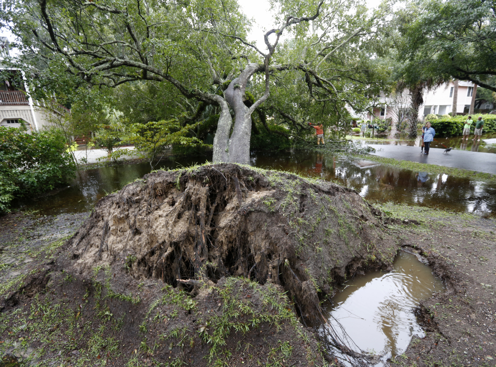 Neighbors watch employees with the city of Isle of Palms cut down a live oak tree that fell down on 23rd Avenue after heavy rains fell on Isle of Palms, South Carolina, on Sunday.