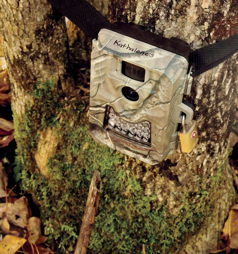 A game camera is aimed at a baited live trap in the woods in Clinton on Monday by Kathy LaCroix in hopes that missing cat Dracula will take the bait.