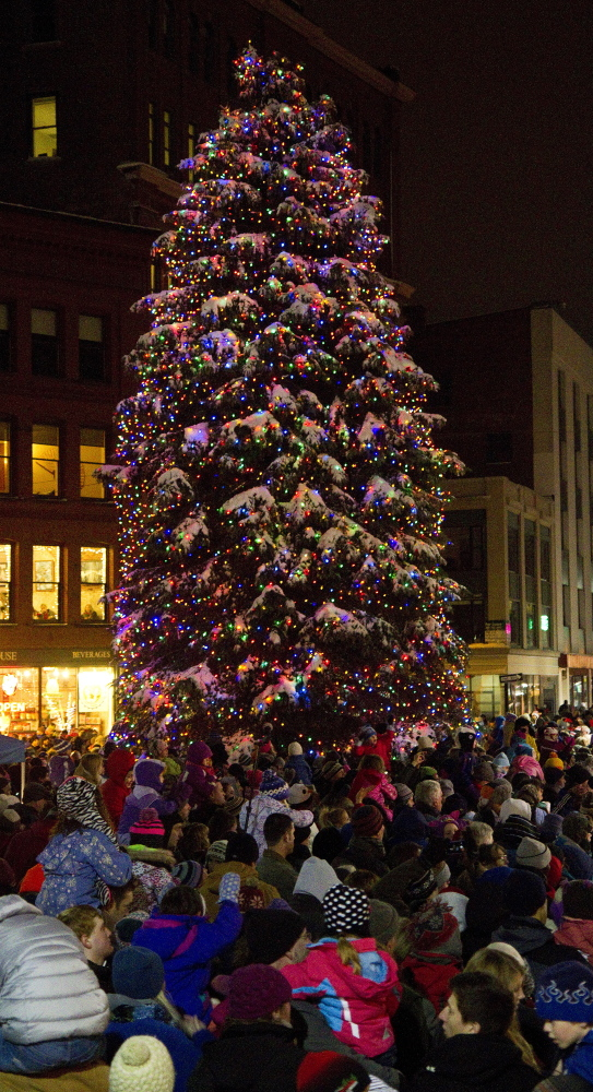 Portland Maine Christmas.Portland Begins Search For Stately Well Rounded Christmas Tree