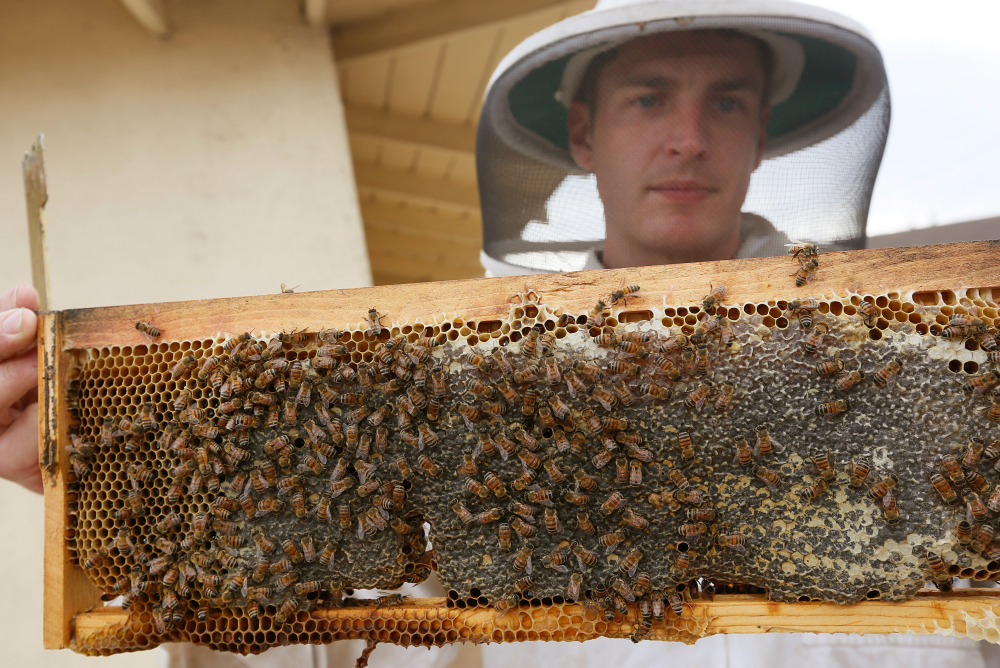 Los Angeles beekeeper Rob McFarland, who has kept bees on the roof of his Los Angeles house for the past three years, no longer has to operate in a legal gray area in Los Angeles.